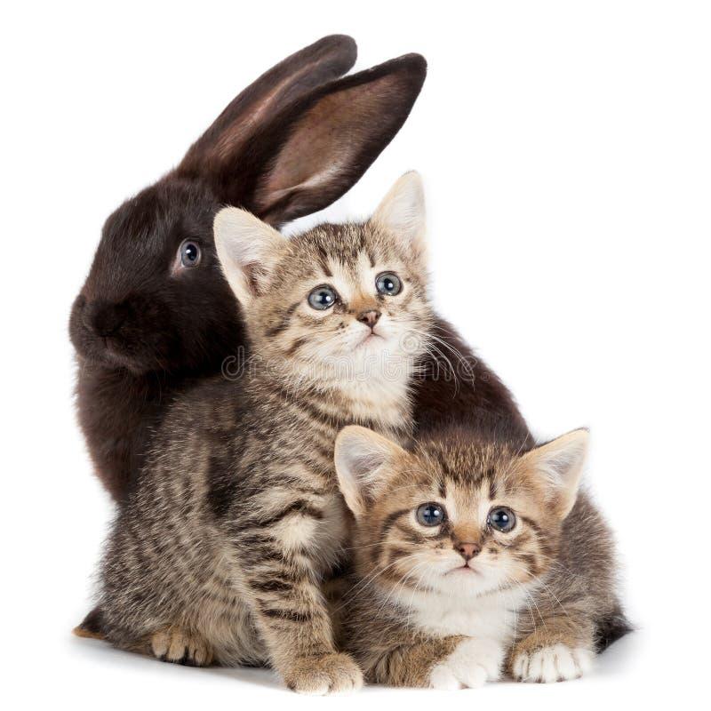 Gattino e coniglio fotografie stock
