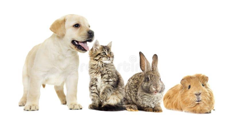 Gattino e cucciolo e coniglietto fotografie stock