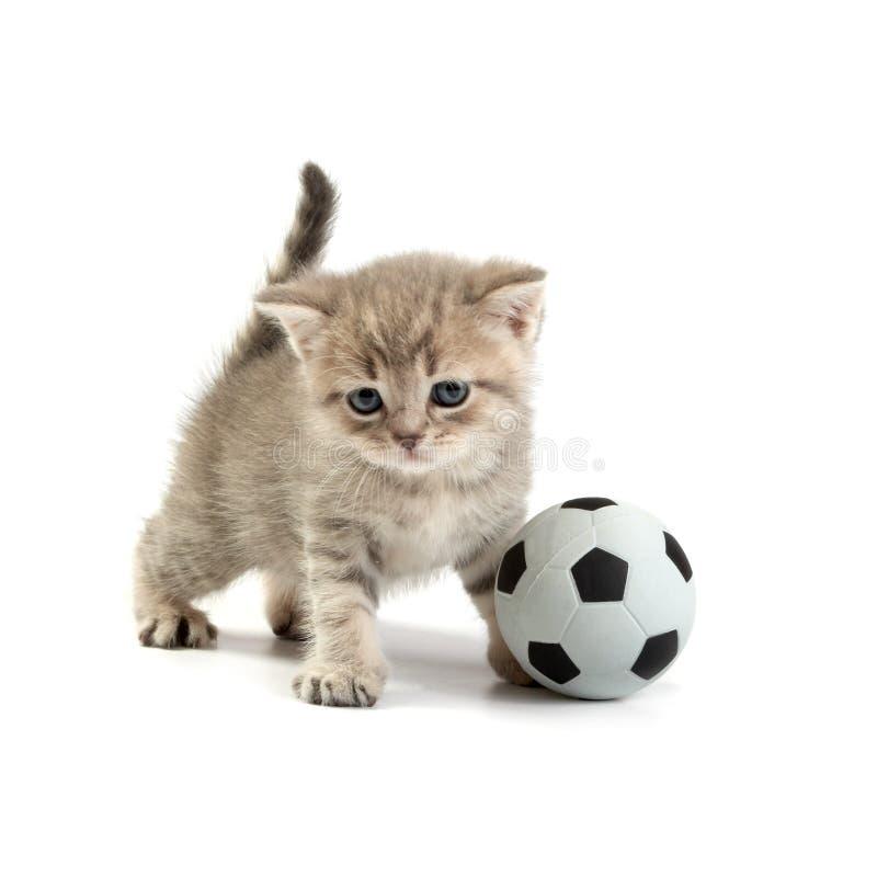 Gattino e un gioco del calcio immagini stock