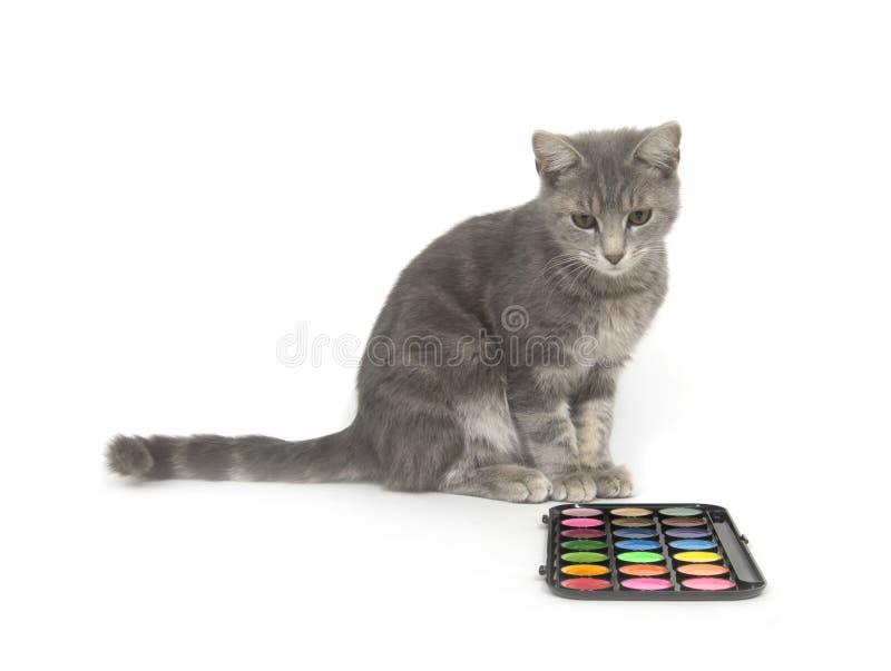 Gattino e vernici immagini stock