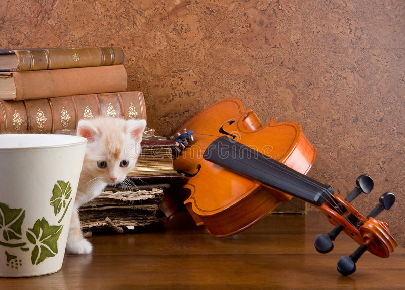 Gattino e violino fotografia stock