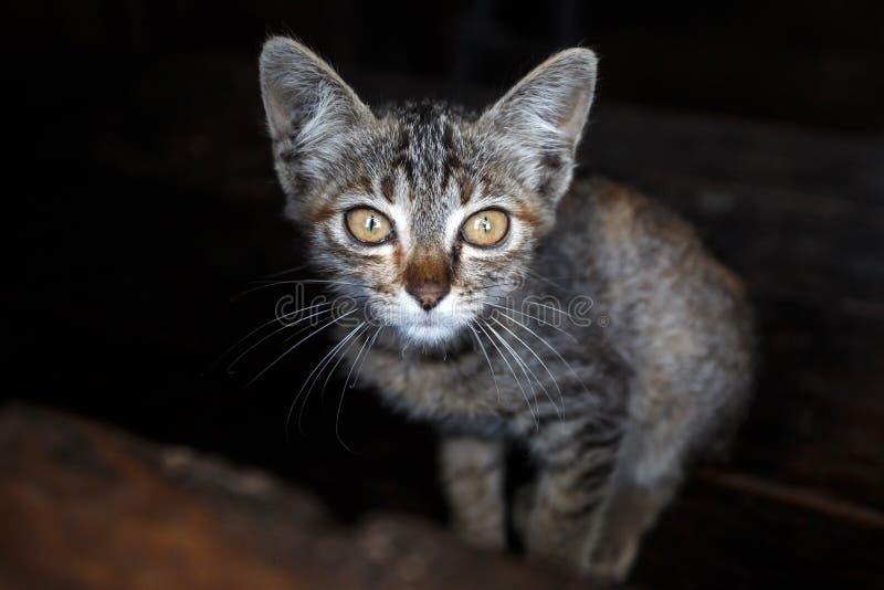 Gattino in Falam, Myanmar (Birmania) immagine stock libera da diritti