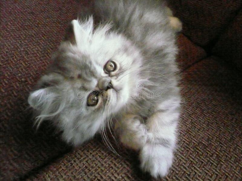 Gattino felice fotografia stock