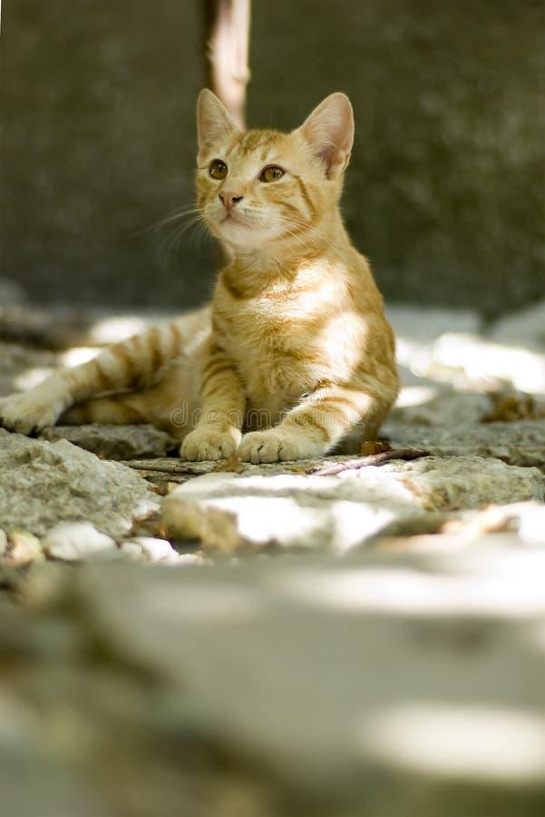 Gattino fragile fotografie stock libere da diritti