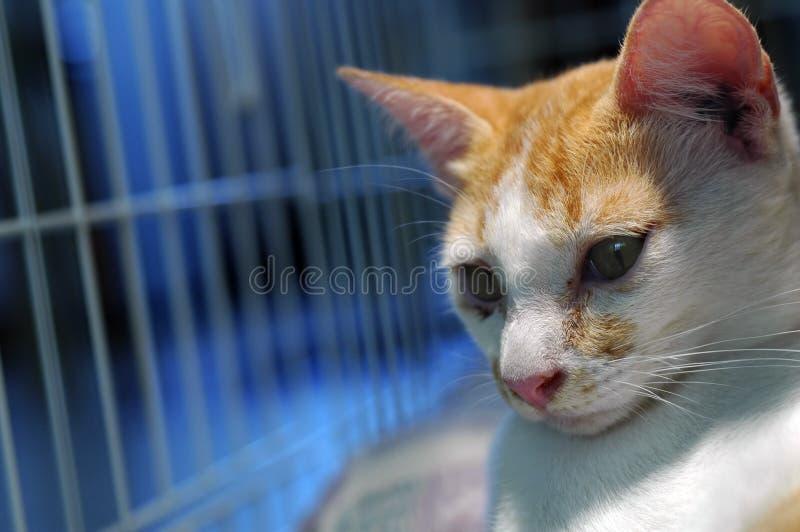 Gattino in gabbia immagine stock