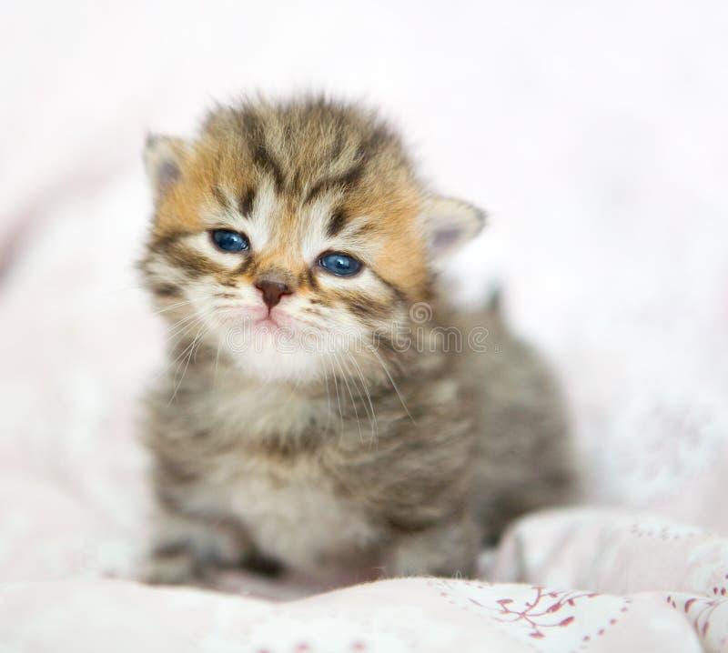Gattino grazioso immagine stock