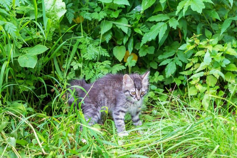 Gattino grigio che gioca nel giardino fotografie stock libere da diritti