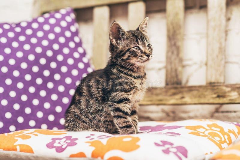 Gattino grigio del soriano del bambino adorabile su un banco del giardino fotografia stock libera da diritti