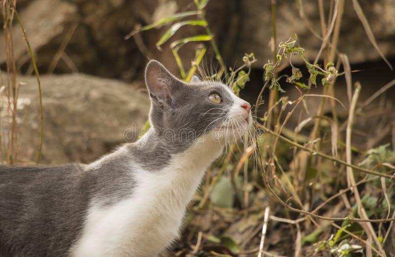 Gattino grigio e bianco che esamina attentamente una foglia fotografie stock libere da diritti