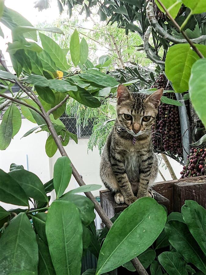 Gattino impertinente sveglio sul recinto fotografie stock