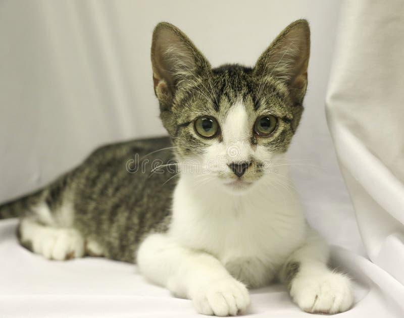 Gattino isolato del soriano su uno sfondo bianco fotografia stock libera da diritti