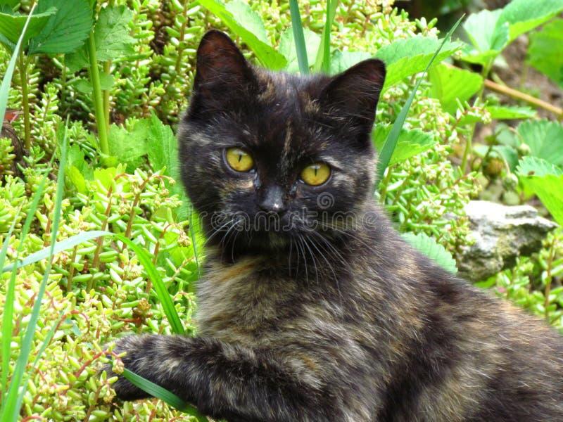 Gattino marrone sveglio in erba Bello ritratto del gatto fotografia stock libera da diritti