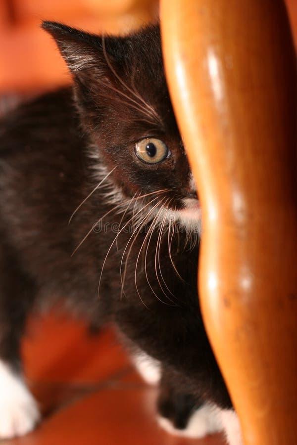 Gattino nascosto fotografia stock libera da diritti