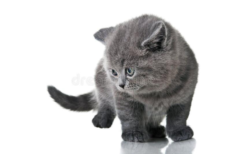 Gattino nazionale fotografie stock libere da diritti