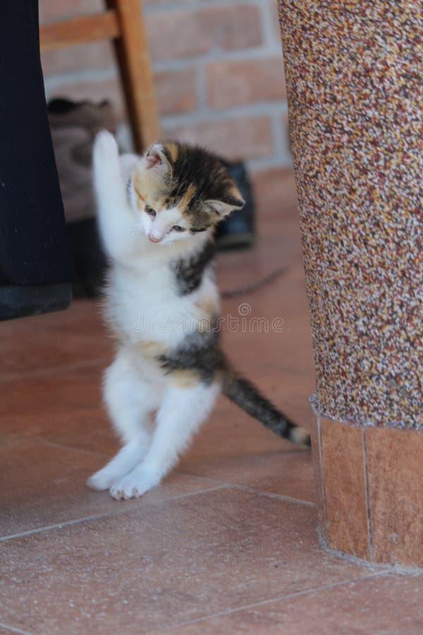 gattino nell'azione fotografia stock libera da diritti