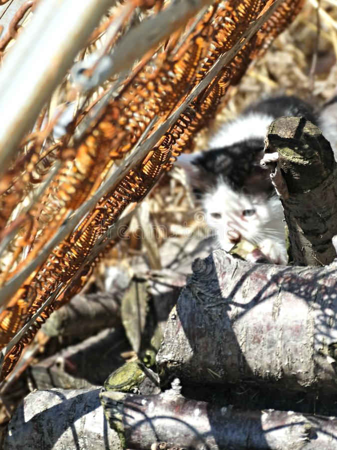 Gattino nella regolazione industriale & in x28; color& x29; fotografia stock libera da diritti