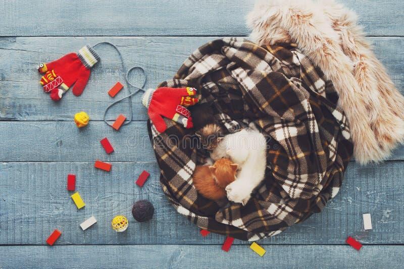 Gattino neonato bianco ed arancio in una coperta del plaid immagine stock libera da diritti