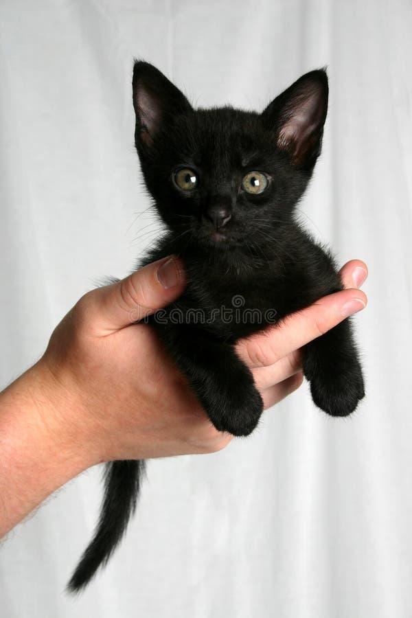 Gattino nero immagini stock libere da diritti
