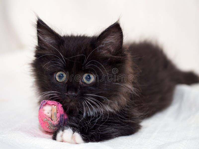 Gattino nero avvezzo con la zampa bendata fotografia stock libera da diritti