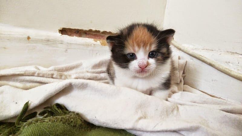 Gattino nero bianco arancio sveglio fotografia stock libera da diritti