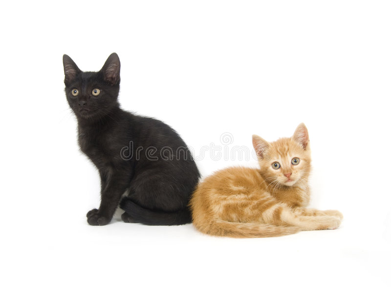 Gattino nero e giallo fotografia stock