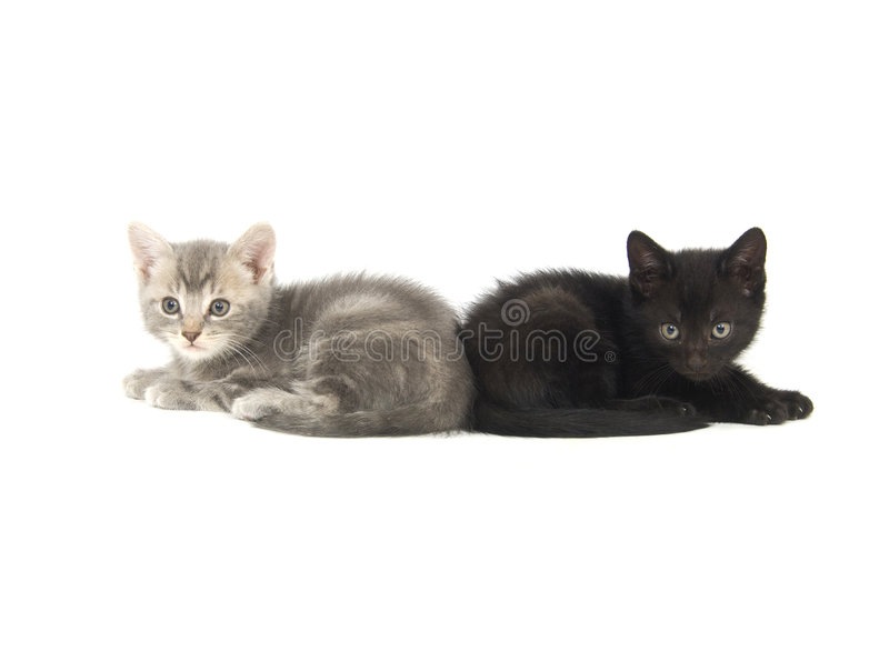 Gattino nero e grigio fotografia stock