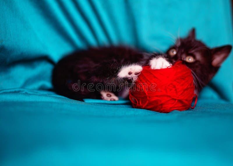 Gattino nero sopra un fondo rosso immagini stock libere da diritti