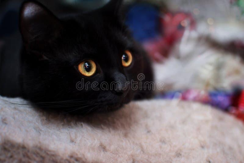 Gattino nero sui precedenti delle decorazioni di Natale immagini stock libere da diritti