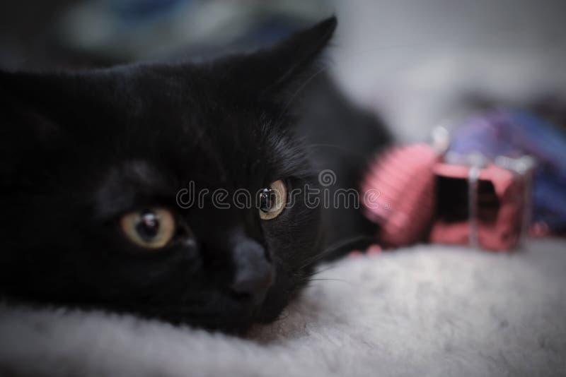 Gattino nero sui precedenti delle decorazioni di Natale fotografia stock
