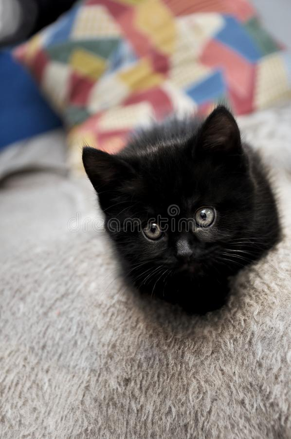 Gattino nero sul letto a casa fotografia stock libera da diritti