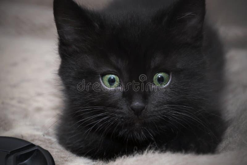 Gattino nero sul letto a casa immagine stock libera da diritti