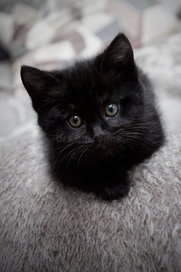 Gattino nero sul letto a casa fotografie stock libere da diritti