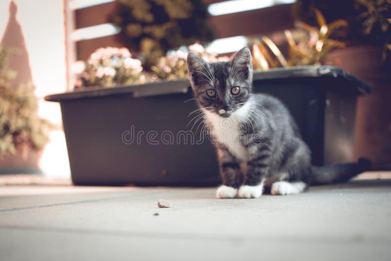 Gattino osservato verde immagini stock libere da diritti