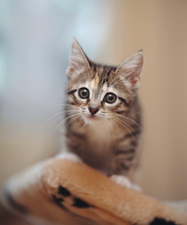Gattino piacevole a strisce fotografia stock libera da diritti