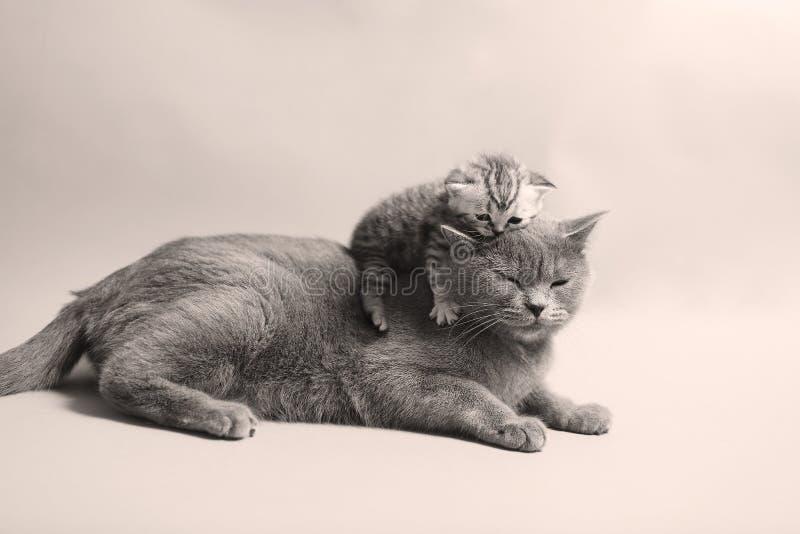 Gattino recentemente sopportato sveglio fotografie stock
