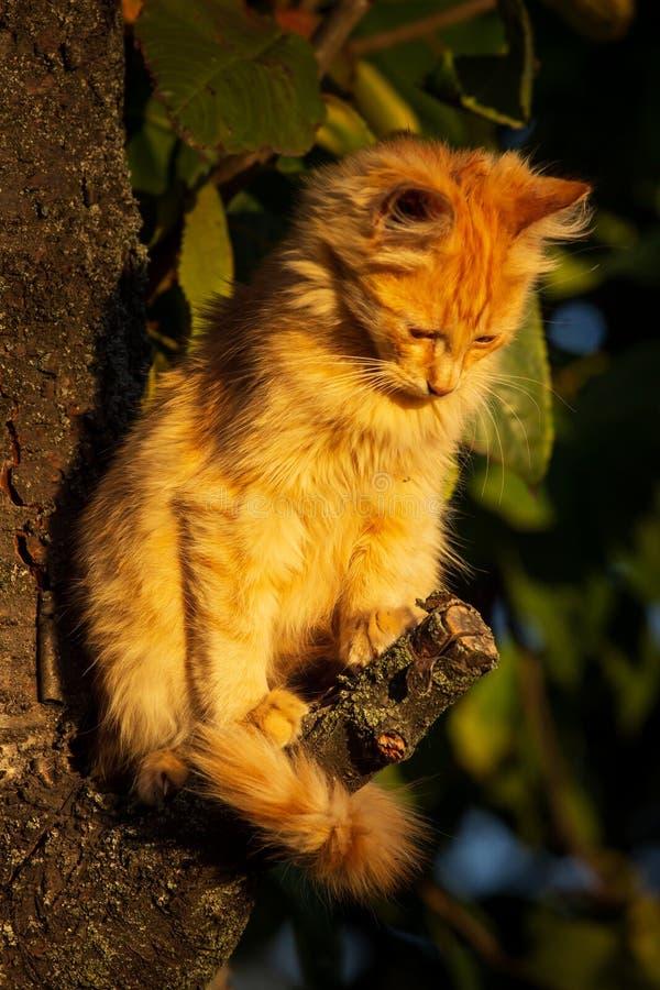 Gattino rosso in autunno in anticipo sulla grande corteccia di albero Chiuda sul gattino sveglio che scala sull'albero a settembr fotografie stock