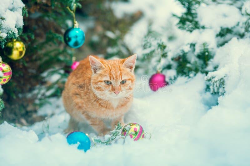 Gattino rosso che si siede vicino all'albero di Natale fotografia stock libera da diritti