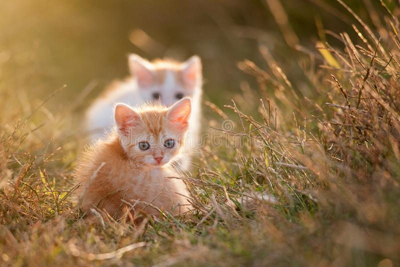 Gattino rosso del giovane bambino sveglio due su una bella luce immagini stock libere da diritti