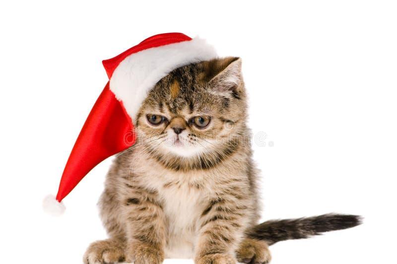 Gattino Santa fotografie stock libere da diritti