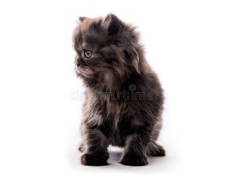 Gattino scuro simile a pelliccia sveglio che guarda da parte isolato fotografie stock