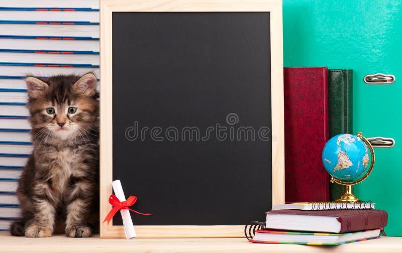 Download Gattino siberiano fotografia stock. Immagine di graduazione - 56879666