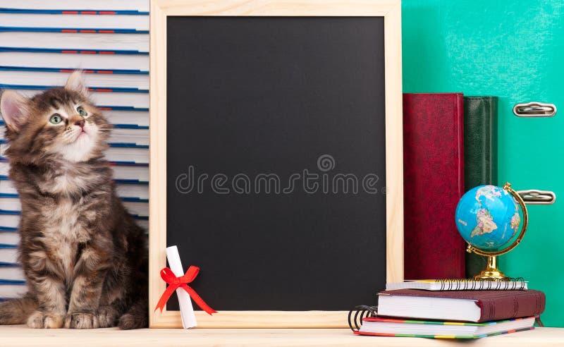 Download Gattino siberiano immagine stock. Immagine di diploma - 56891513