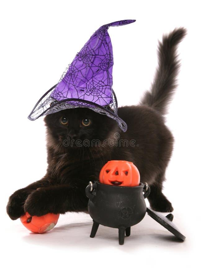 Gattino siberiano nero di Halloween fotografia stock libera da diritti