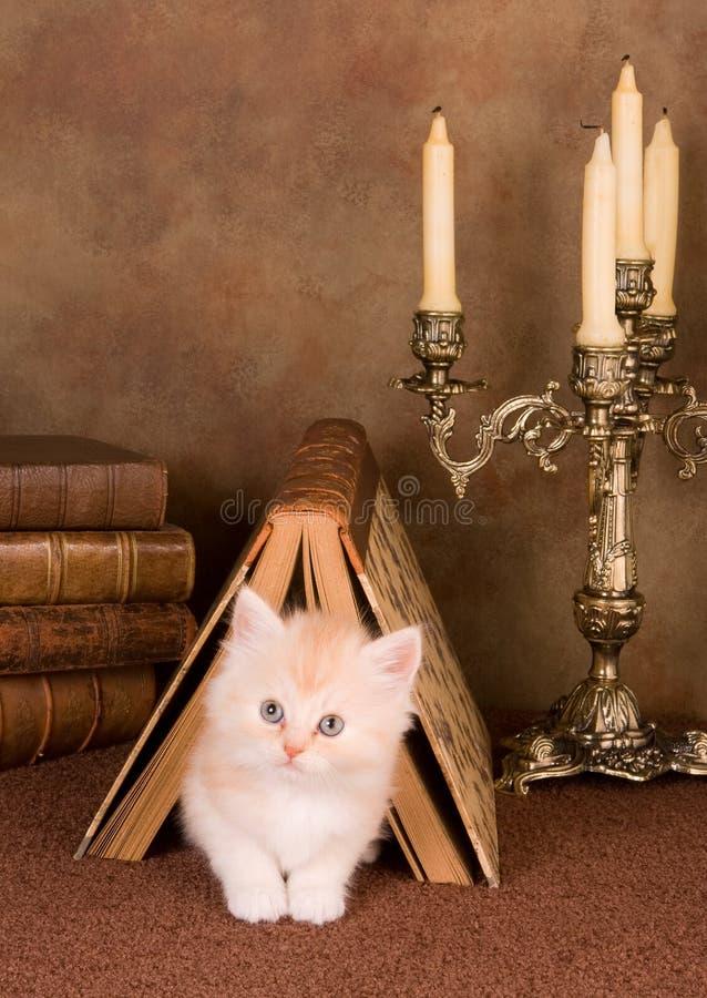 Gattino sotto un libro fotografie stock