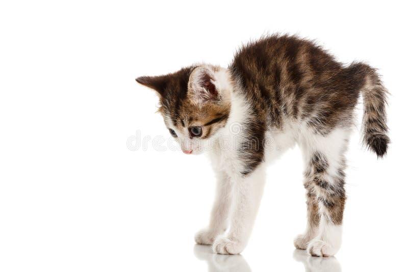 Gattino spaventato immagine stock