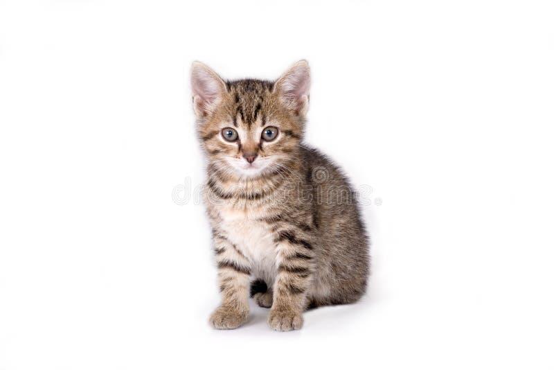 Gattino a strisce che si trova giù fotografie stock libere da diritti