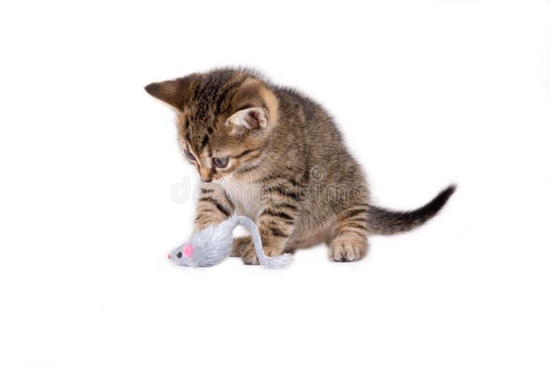 Gattino a strisce e un giocattolo del mouse fotografia stock libera da diritti