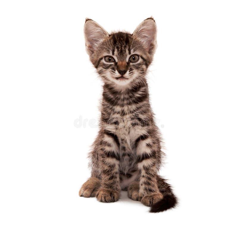 Gattino a strisce grigio con un grin scettico fotografia stock