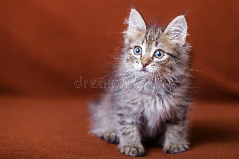 Gattino a strisce sveglio fotografia stock