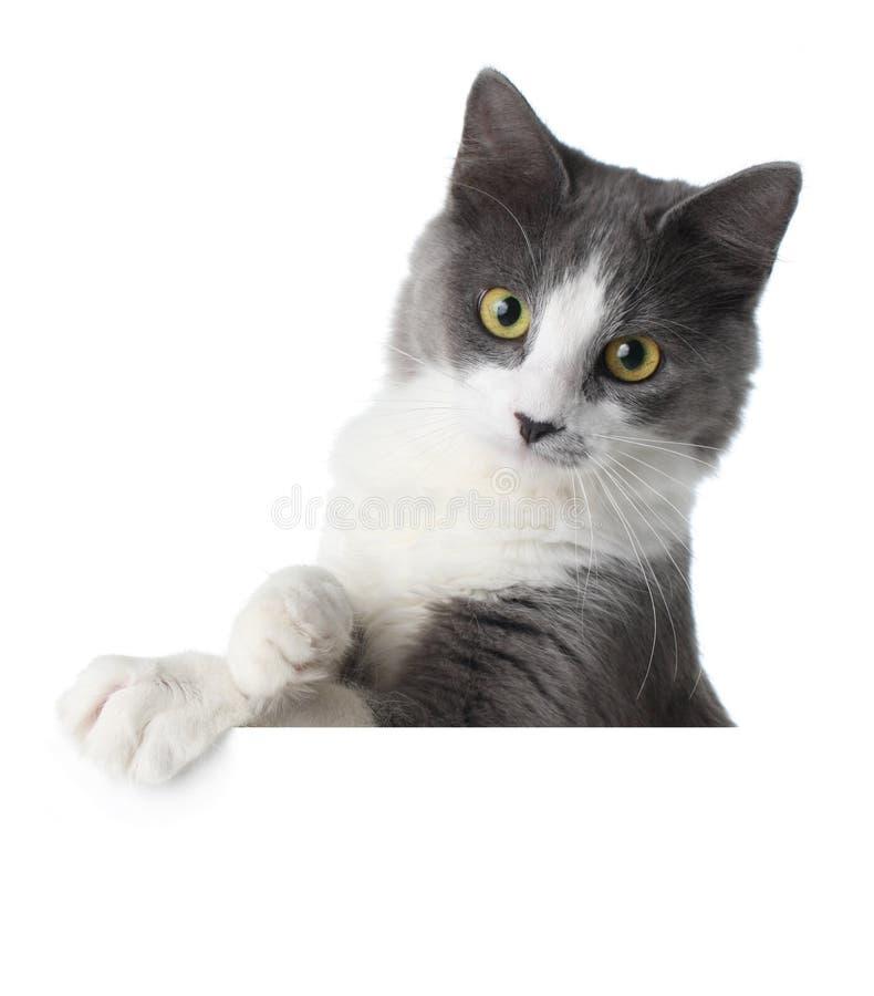 Gattino sul segno in bianco fotografie stock libere da diritti